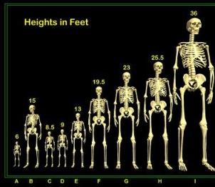 a_9.Skeletons