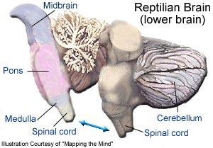 reptilianbrain2